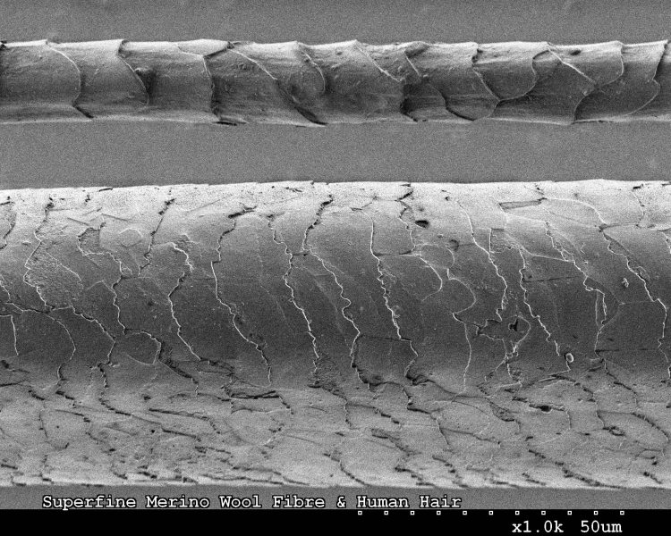 CSIRO_ScienceImage_8115_Human_hair_and_Merino_wool_fibre